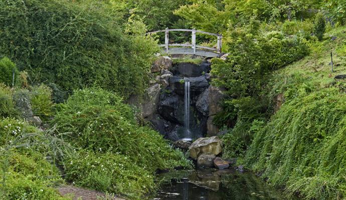 Qigong at Quarryhill Botanical Garden